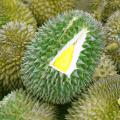 พันธุ์ทุเรียน ราชาแห่งผลไม้ไทย