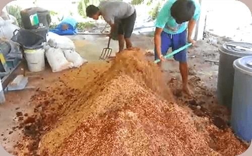 ประเภทของปุ๋ย ที่ใช้ในการเกษตร