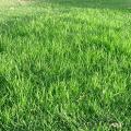 การเลือกหญ้าตามการใช้งาน