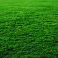 วิธีดูแลรักษาตัดแต่งหญ้าในสนาม ในสวนหน้าบ้าน