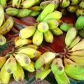 แปรรูปกล้วยตากจากกล้วยน้ำว้าสุกพร้อมวิธีการทำกล้วยตาก