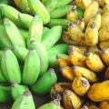 กล้วยน้ำว้าสุกและดิบ