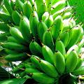กล้วยไข่เชื่อม ขนมหวานจากการแปรรูปกล้วยไข่ทำง่ายๆด้วยตัวเอง