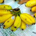 การแปรรูปกล้วยดิบ กล้วยไข่กรอบแก้ว สร้างรายได้จากกล้วย