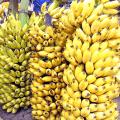 ประโยชน์ โภชนาการ พลังงานและคุณค่าทางอาหารของกล้วย