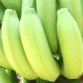 กล้วยหอม การปลูกขยายพันธุ์ ประโยชน์สรรพคุณ คุณค่าโภชนาการ และแปรรูปกล้วยหอม