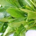 ผักกวางตุ้ง ภาคใต้เรียก ผักกาดสายซิม พืชอายุสั้น ผักกาดชนิดไม่ห่อปลี