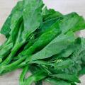 ผักคะน้า ผักกินใบกินต้น พืชอายุสั้นนิยมนำมาใช้ทำอาหารได้หลายเมนู