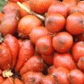 ระกำ ส้มกำ ผลไม้รสเปรี้ยว ก้านมีหนาม ใบคล้ายต้นปาล์ม นิยมนำมาทำน้ำพริก