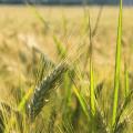 เกษตรตำบล คืออะไร ทำหน้าที่อะไรบ้าง