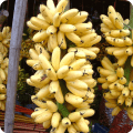 กล้วยไข่ ผลไม้เครือ ผลไม้เขตร้อน นิยมรับประทานสด และแปรรูป