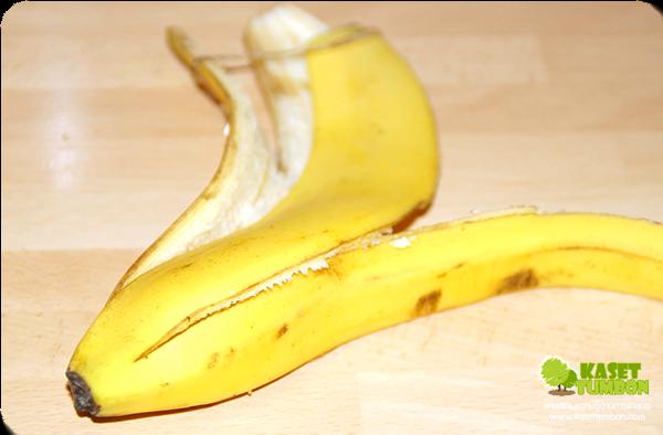 ประโยชน์ของเปลือกกล้วย เปลือกกล้วยทําอะไรได้บ้าง