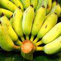 กล้วยน้ำว้า พันธุ์กล้วยน้ำว้า การปลูกกล้วยน้ำว้า ให้มีขายทั้งปี