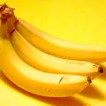 กล้วยหอมทอง การปลูกกล้วยหอมทองพันธุ์