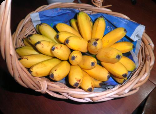 วิธีปลูกกล้วยไข่ เคล็บลับการปลูกกล้วยไข่ให้ผลผลิตที่ดี