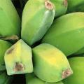 กล้วยหักมุก ประโยชน์และสรรพคุณของกล้วยหักมุก กล้วยทานสุก