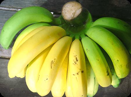 ประโยชน์และสรรพคุณของกล้วยห่ามหรือกล้วยเริ่มสุก