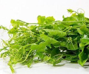 ซาโยเต้ หรือ ฟักแม้ว มะระหวาน เป็นไม้เลื้อย ทานได้ทั้งผล ใบ ยอด สรรพคุณ รวมถึงการปลูก