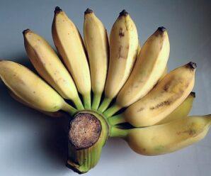 กล้วย ประโยชน์และสรรพคุณของกล้วย