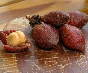 ระกำ หรือ ลูกกำ (ใต้) รับประทานเป็นผลไม้สด และนำมาปรุงรสเปรี้ยวในอาหาร