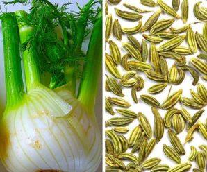 เฟนเนล เป็นผักที่ให้แคลเซียมสูง นิยมรับประทานสด
