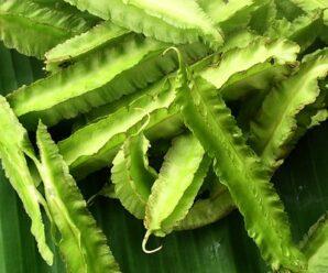 ถั่วพู ฝักอ่อน รับประทานเป็นผักสดจิ้มน้ำพริก