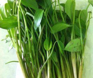 ผักหิน ผักเขียด วัชพืชน้ำขึ้นเองตามธรรมชาติ