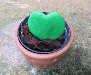 หัวใจทศกัณฐ์ ใบรูปหัวใจคว่ำ สีเขียวเข้ม