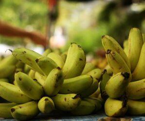 กล้วยไข่ มีวิตามินอี เบตาแคโรทีน และวิตามีนซี ซึ่งเป็นสารต้านอนุมูลอิสระที่เป็นสาเหตุของโรคมะเร็ง