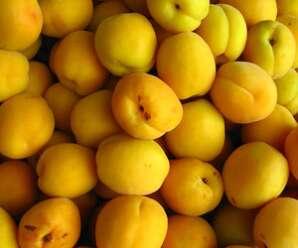 แอพริคอต ผลสุก เนื้อแน่นสีเหลือง มีรสชาติหวานอมเปรี้ยว มีกลิ่นหอม