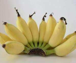 10 ประโยชน์ของกล้วยน้ำว้า ช่วยรักษาได้สารพัดโรค