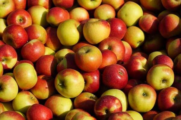 ผลแอปเปิล
