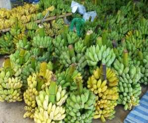 ความเชื่อเรื่องกล้วยของชาวล้านนา