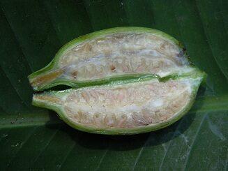 ผลกล้วยป่า