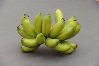 ผลกล้วยกุ้งเขียว