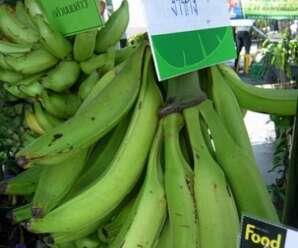กล้วยงาช้าง ผลมีขนาดใหญ่ รสชาติหวาน หอม เนื้อแน่นเนื้อเป็นแป้งเก็บไว้ได้นาน