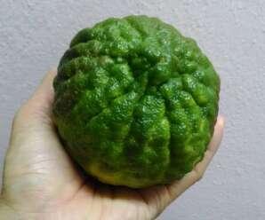 ส้มซ่า ผลสุกรสหวานอมเปรี้ยว ผลทรงกลม ผิวขรุขระเล็กน้อย