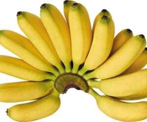 ลักษณะของกล้วยไข่ กล้วยหอม กล้วยที่มีรสหวานและกลิ่นหอม